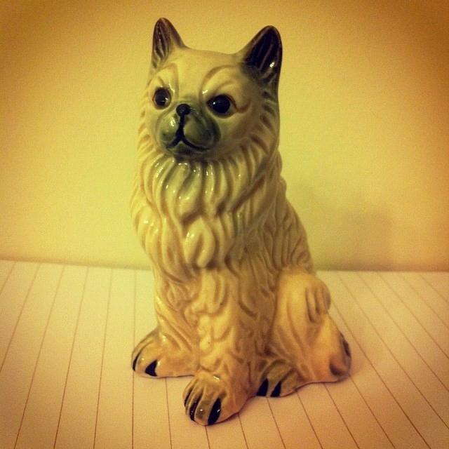 #catdog